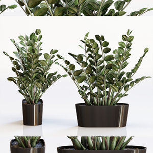 amazing plant 3 zamioculcas 3D model