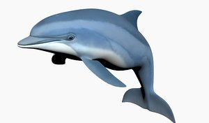 3D dolphin modeled
