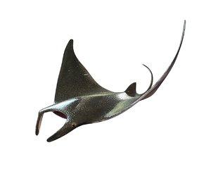 mammal aquatic 3D
