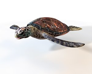 3D turtle rigged