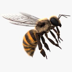 honey bee 3D