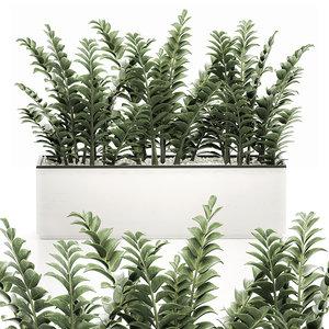 decorative pots interior zamioculcas 3D model