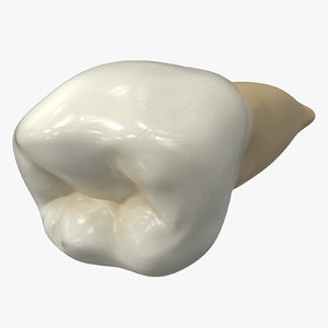 3D human teeth lower second model