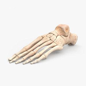 foot m 3D model