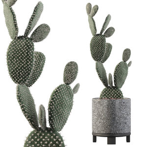 opuntia microdasys flower pot 3D model