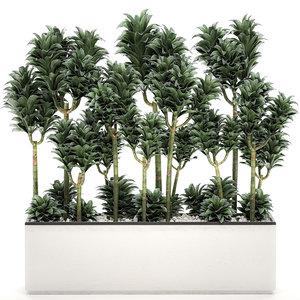decorative interior pots dracena 3D model