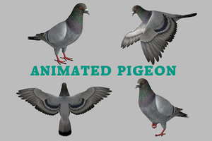 realistic rock pigeon animations model