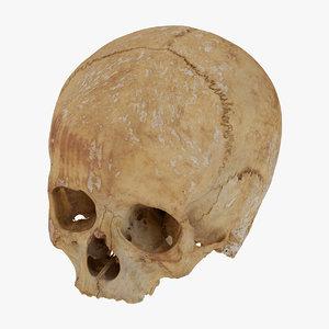 human skull cranial 01 3D model