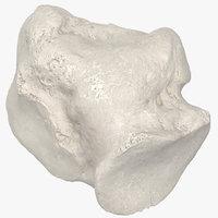 Real Cuboid Bone 01 White