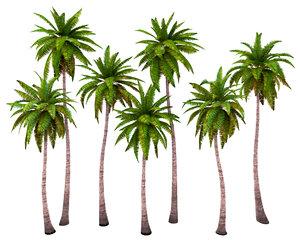 bark polys palms 3D model