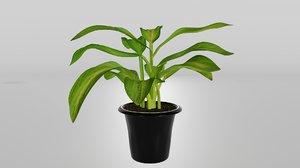 3D dieffenbachia plant