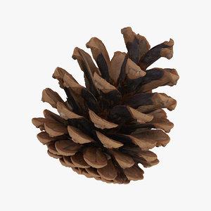 3D pine cone 01 raw