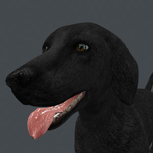 rigged dog standing place 3D model