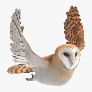 barn owl animations 3D model