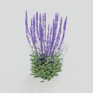 salvia nemorosa caradonna gardens 3D model