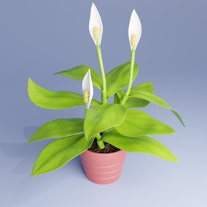 3D spatifillum plant pot model