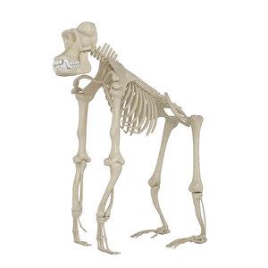 gorilla skeleton 3D model