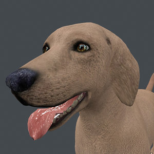 3D model rigged dog standing place