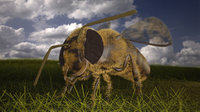 Asian hornet bee
