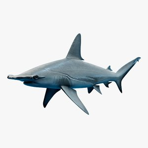hammerhead shark animal fish 3D model