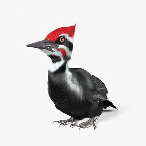 woodpecker bird animal model