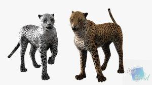 rigged leopard cheetah snow 3D