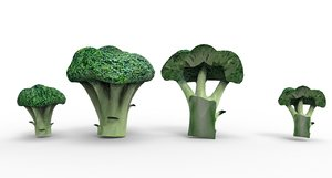 broccoli vegetable food 3D model