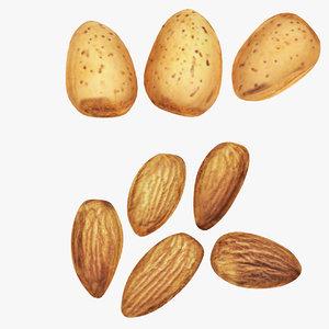 3D food nut model