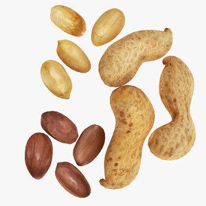 peanut nut pea model