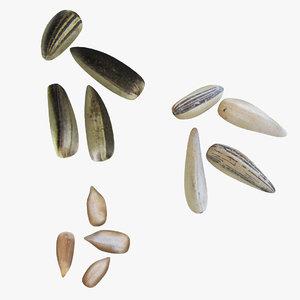 3D sunflower seeds model
