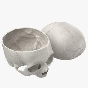3D human skull cranial 02