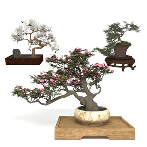 decorative bonsai 3D model
