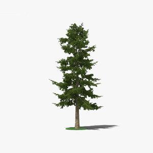 3D cedar tree model