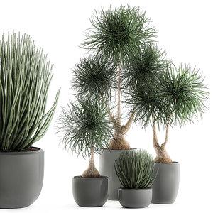 decorative pots interior beaucarnea model