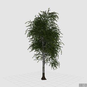 3D betula pendula silver birch