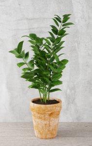 plant indoor nature model
