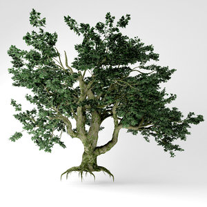 3D big leaf maple tree model