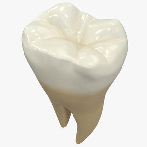 3D model human teeth lower molar