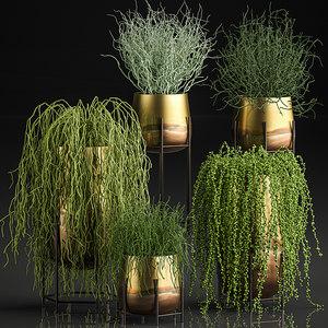 plants pots interior succulent 3D
