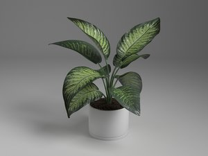 interior dieffenbachia 3D model
