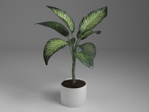 3D dieffenbachia tall