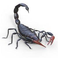 Scorpio rigging