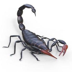 scorpion animation 3D model