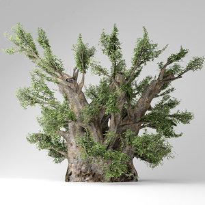 african baobab tree 3D model