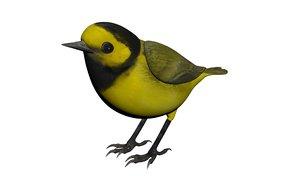 3D bird hooded warbler model