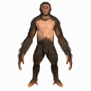 3D model hominid man monkey