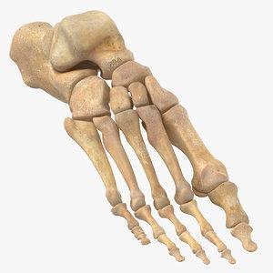 human foot bones anatomy 3D model