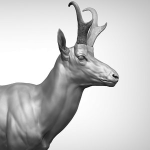 3D pronghorn antelope antilocapra americana