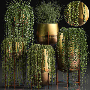 plants pots interior succulent 3D model