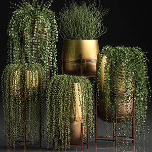 plants pots interior succulent 3D model